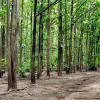 CI/Haut Sassandra: Démarrage du projet une «école 5 ha de forêt»